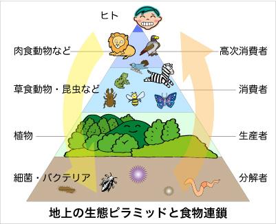 生態ピラミッドと食物連鎖