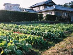 farmer_house