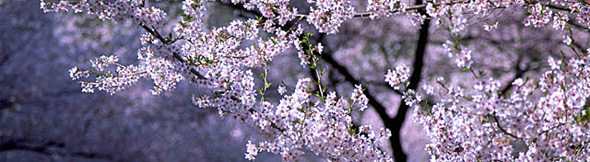 パッと咲いてパッと散る。そんな人生でも200%きれいに咲き誇りたい!