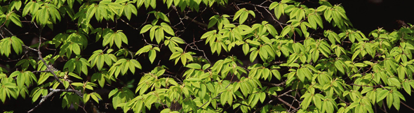 新緑がまぶしい季節!自分も新しい芽を出し、新しい気を発する、そんな季節!