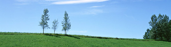 「親」という字は、親が我が子を「木の上に立って見る」という意味がある