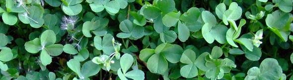 四つ葉のクローバー:幸運を作るというのは、チャンスに備えて下ごしらえをしておくこと。