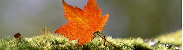 いよいよ実りの秋、収穫の秋だね