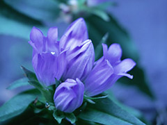 健気に咲く花